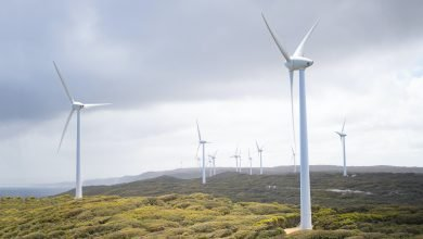 Amazon Launches Wind Farm in Sweden as Part of its Sustainability Efforts