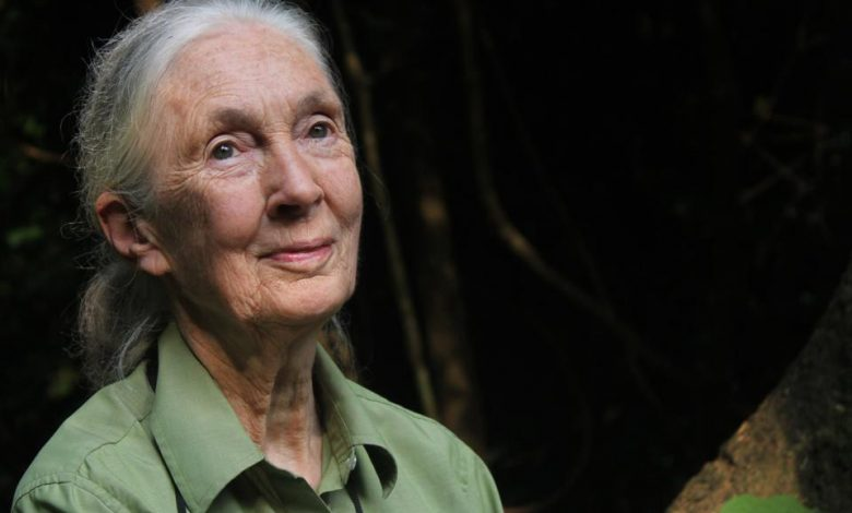Interview with Dr. Jane Goodall: 'We've Got to Get Together and Take Action Now'
